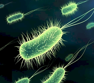 """new ways to squash superbugs New ways to squash superbugs [techniques]: mining genes for drugs  """"superbug strikes in city"""" sounds like a horror movie title, but instead it is a."""